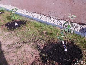 plantes-en-ligne